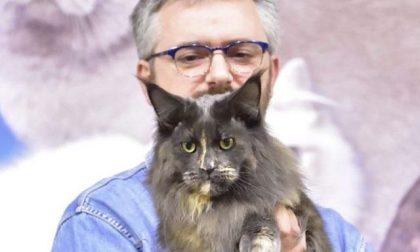 Arwen, è di Valle San Nicolao la gatta più bella del mondo