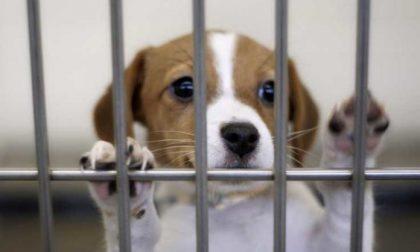 Coronavirus: aumentano cani abbandonati, risponde Punto Animal Friendly