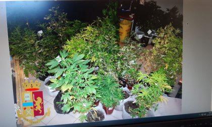 In casa una serra di marijuana: arrestato