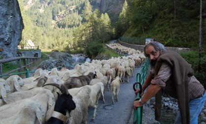 Addio al pastore Federico Seletto