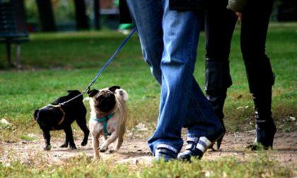 «Volontari per i cani in quarantena»