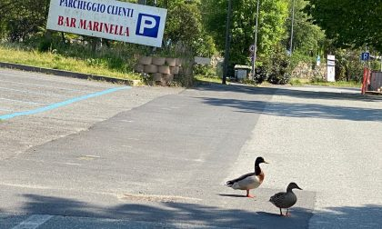 Animali per la strada e salti continui delle grosse carpe in un lago deserto