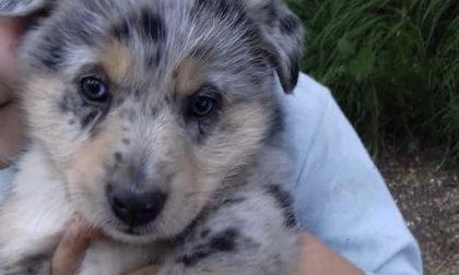 """""""Aiutatemi a trovare il mio cucciolo, manca da casa da tre giorni""""- MASSIMA CONDIVISIONE"""