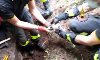 Gattino intrappolato in un tubo… all'Università IL VIDEO DEL SALVATAGGIO