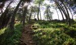 Nasce Zegna Forest, il piano per gli alberi dell'Oasi
