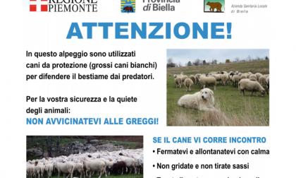 """""""Attenzione"""", i cartelli per aiutare escursionisti in montagna (con cani e greggi)"""
