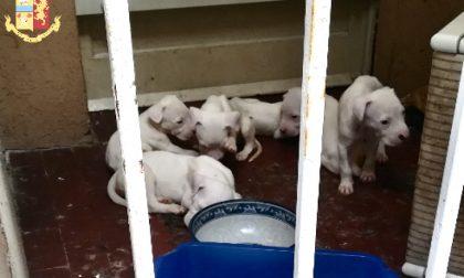 Abbandona per giorni 10 cani sul balcone e se ne va in vacanza, denunciato