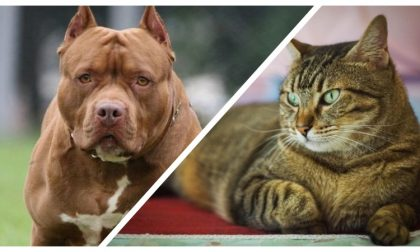 Abbandona per giorni i suoi animali, un gatto e un pit bull. Verrà denunciato