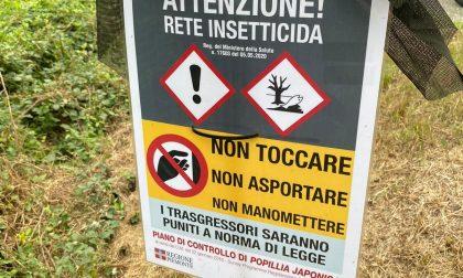 Trecento reti insetticide per combattere la Popillia