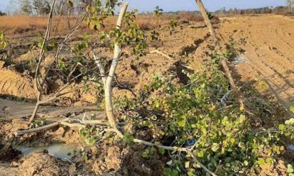 Baraggia, dopo le esercitazioni Legambiente cerca materiale per documentare i danni