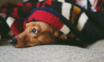Pandemia, Punto Animal Friendly in supporto di chi è in difficoltà