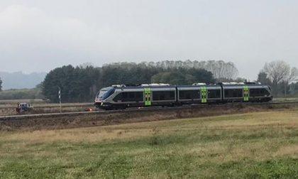 Treno investe mucche sulla Biella-Novara