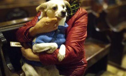 Torna la messa dedicata ai cani. Ecco quando e dove