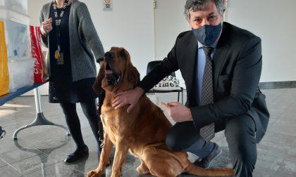 """I cani che """"fiutano"""" il Covid sono già al lavoro in un progetto regionale"""