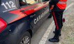 Capriolo ucciso a fucilate: è caccia… al bracconiere