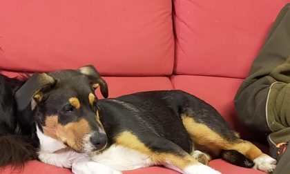 Ritrovati i due cani Aron e Skoll, fuggiti ieri a Sandigliano e in Valle Cervo