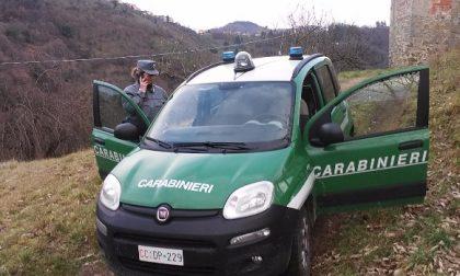 Spari di cacciatori vicino alle case: altri interventi dei Carabinieri
