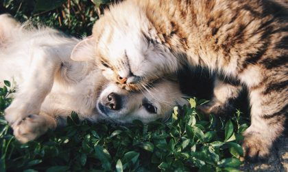 Legambiente: Come comportarsi con gli animali feriti, abbandonati, maltrattati