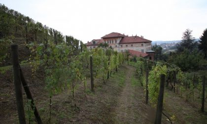 """Il sogno di Vigliano: diventare """"Città Europea del Vino 2023"""""""