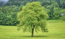 Un albero per ogni vittima di Covid-19. Il sindaco si oppone ed esplode la polemica