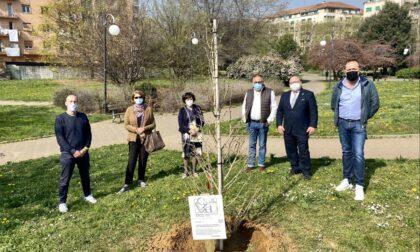 Biella, piantato un ginkobiloba in memoria delle vittime del Covid-19