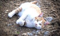 Gatto trovato agonizzante  nel cassonetto dei rifiuti