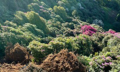 Le foto del disastro in Burcina, collassato il viale dei rododendri
