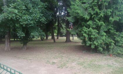 Pulitura in tempi record del Parco della Rovere contro lo spaccio