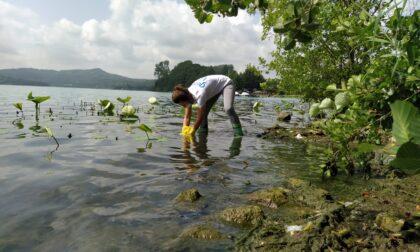 Lago di Viverone inquinato? Legambiente lancia l'allarme